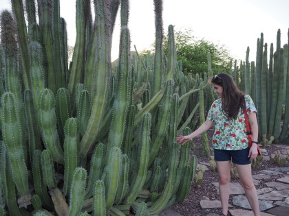 Really tall cactus