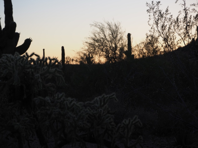 fading light as it reflects off the spines of a cactus